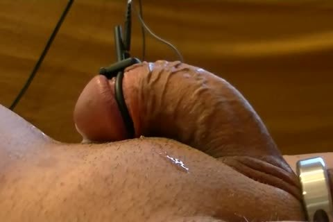 Starting With vigour between Ring At The Balls And But-plug, Later Adding vigour between Cockhead And But-plug